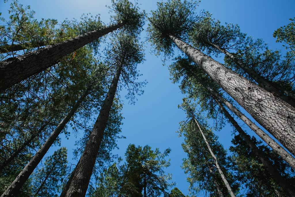 Trees towering above at the campground.