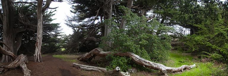 mojocreates_cypressgrovemendo_09